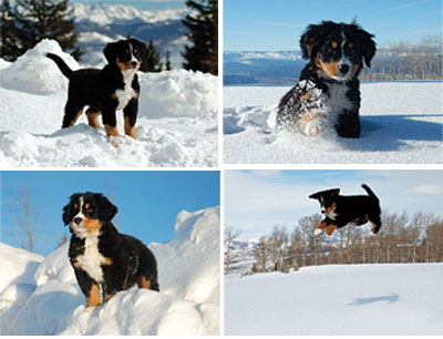Hannah the Mountain Dog Notecards