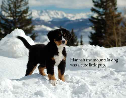 Hannah the Mountain Dog was a Cute Little Pup